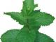 Aportaciones de la medicina biológica en el tratamiento del asma alérgico