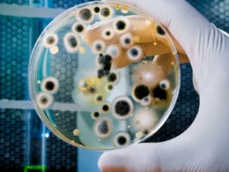 Microbios: ¿nuestros enemigos?